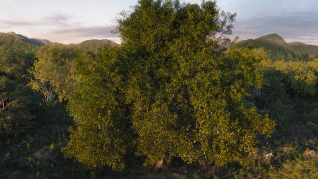 Baum, McDonalds, CGI, 3D, Treedom